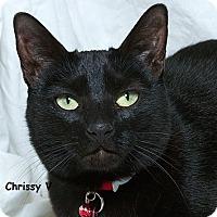 Adopt A Pet :: Chrissy V - Sacramento, CA