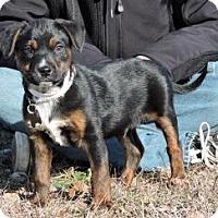 Adopt A Pet :: Zeus - Berkeley Heights, NJ