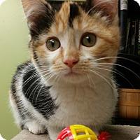 Adopt A Pet :: CALI - Cleveland, MS