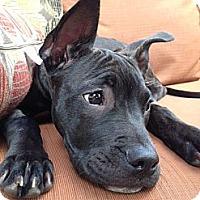 Adopt A Pet :: Missy - Clarksburg, MD
