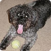 Adopt A Pet :: Marietta, GA - Zip - Boca Raton, FL