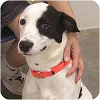 Adopt A Pet :: Janey - Phoenix, AZ