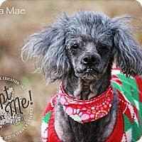 Adopt A Pet :: Martha Mae - Albany, NY