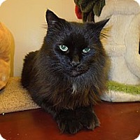 Adopt A Pet :: Ringling - Medina, OH
