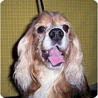 Adopt A Pet :: Red - Menomonee Falls, WI
