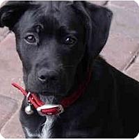 Adopt A Pet :: Redi - Thomasville, GA
