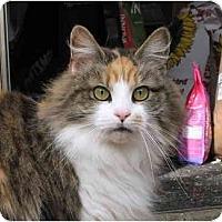 Adopt A Pet :: Trisha - Cincinnati, OH