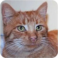 Adopt A Pet :: Finnegan - St. Clements, ON