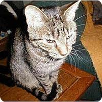 Adopt A Pet :: Clara - Proctor, MN