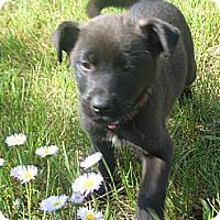 Adopt A Pet :: Charlie - Egremont, AB