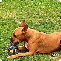 Adopt A Pet :: Dakota Adopted! - Turnersville, NJ