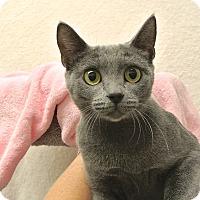 Adopt A Pet :: Helene - Foothill Ranch, CA