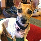 Adopt A Pet :: Caiden low rider
