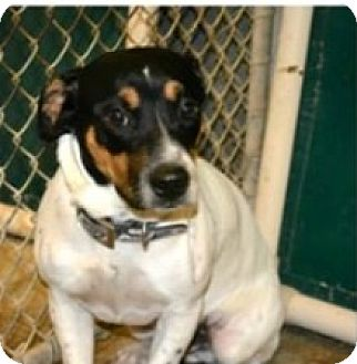 Terrier (Unknown Type, Medium) Mix Dog for adoption in Slidell, Louisiana - Lester
