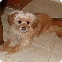 Adopt A Pet :: Ginger - Conroe, TX