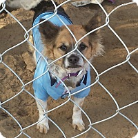Adopt A Pet :: Petey - Fowler, CA