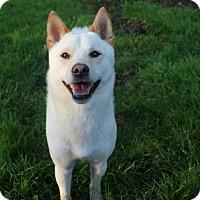 Adopt A Pet :: Taki - Manassas, VA