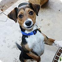 Adopt A Pet :: Roary - Yorba Linda, CA