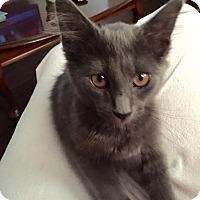 Adopt A Pet :: Tinsel - East Brunswick, NJ