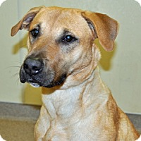 Adopt A Pet :: Maple - Port Washington, NY