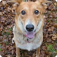 Adopt A Pet :: Mya - Drumbo, ON