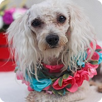Adopt A Pet :: April - Loomis, CA