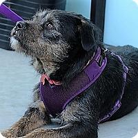 Adopt A Pet :: Molly - Oakley, CA