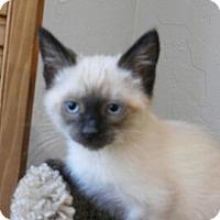 Adopt A Pet :: Aragon - Davis, CA