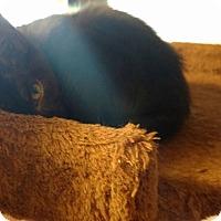 Adopt A Pet :: Blossom - Homewood, AL