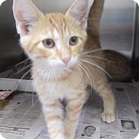 Adopt A Pet :: Preston - North Richland Hills, TX