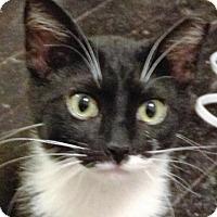 Adopt A Pet :: Mr. Tuck - O'Fallon, MO