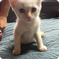 Adopt A Pet :: Queso - Simpsonville, SC