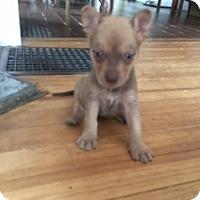 Adopt A Pet :: Marco Polo - Rowayton, CT