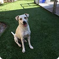 Adopt A Pet :: Nugget - Pompano, FL