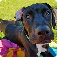 Adopt A Pet :: Ryder - Grand Rapids, MI