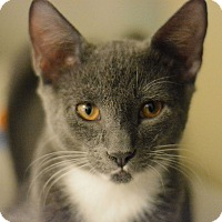 Adopt A Pet :: Maddox - West Palm Beach, FL