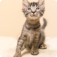 Adopt A Pet :: Thyme - Chicago, IL