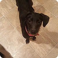 Adopt A Pet :: Jaden - Mooresville, NC