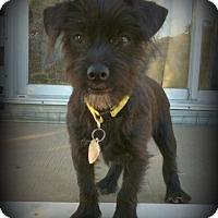 Adopt A Pet :: Tevis - Imperial Beach, CA