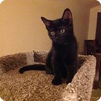 Adopt A Pet :: Eos - Parlier, CA