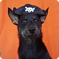 Adopt A Pet :: Oz - East Sparta, OH