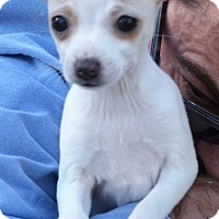 Adopt A Pet :: Maisy ~ ADOPTED! - Brattleboro, VT