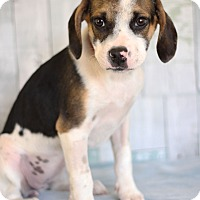 Adopt A Pet :: Stoney - Waldorf, MD