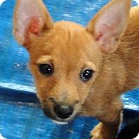 Adopt A Pet :: Trudy - Buena Park, CA