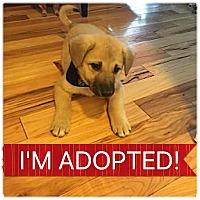 Adopt A Pet :: Quin - Regina, SK