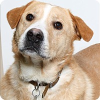 Adopt A Pet :: Frank Furter - San Luis Obispo, CA
