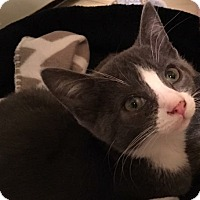 Adopt A Pet :: Hobbs - Jackson, NJ