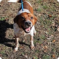 Adopt A Pet :: Graham - Richmond, VA