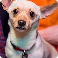 Adopt A Pet :: Kenny! - New York, NY