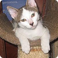 Adopt A Pet :: Kevin - Farmingdale, NY